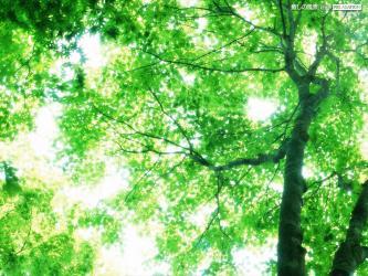 癒し,木,葉っぱ